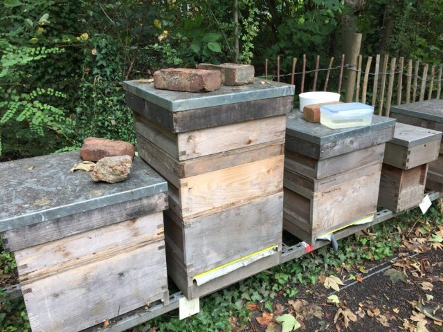 Pepper and Melissa hives