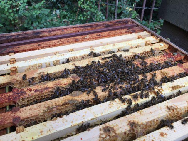 Melissa's hive