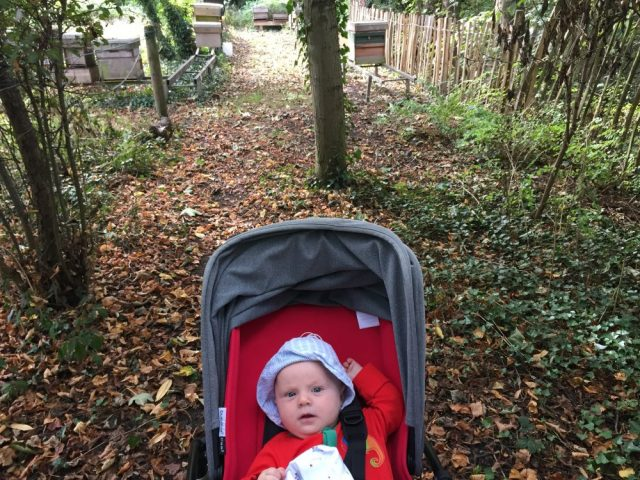 Tommy at the apiary