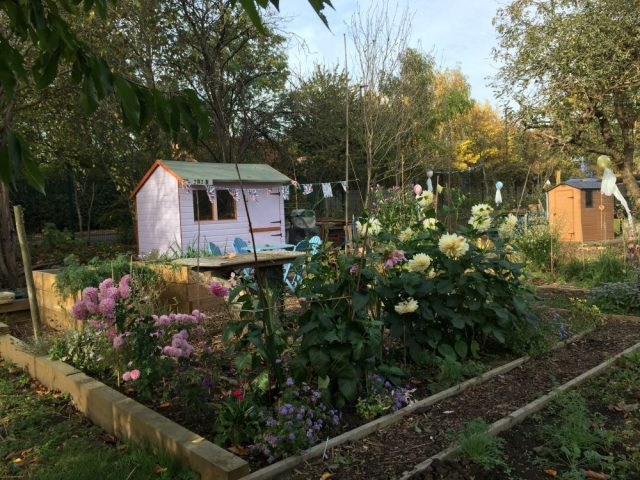Shed allotments