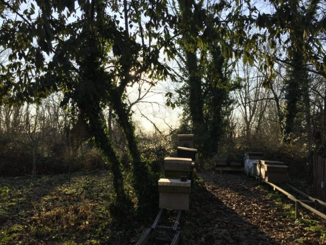 Winter apiary