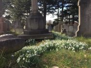 Snowdrops at the cemetery
