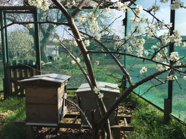 Allotment hives