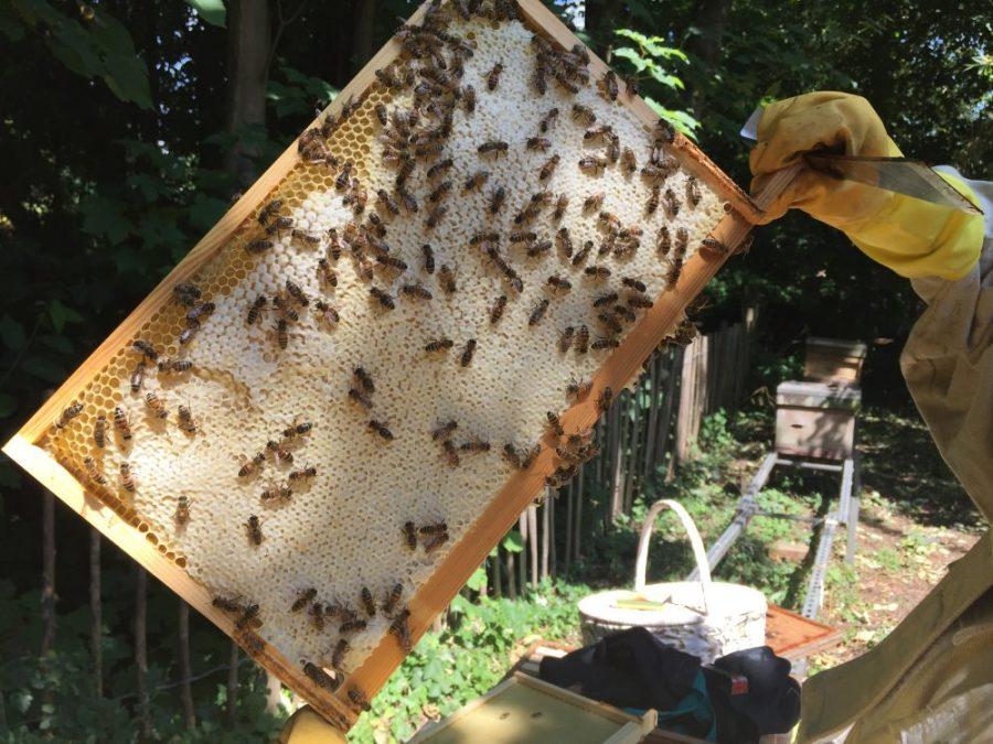 Frame of honey 2