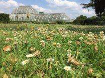 Clover at Kew