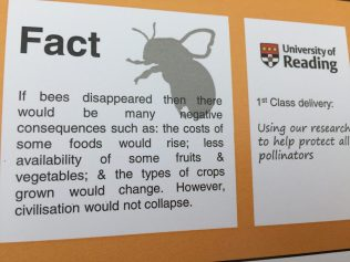 Bee pollination fact