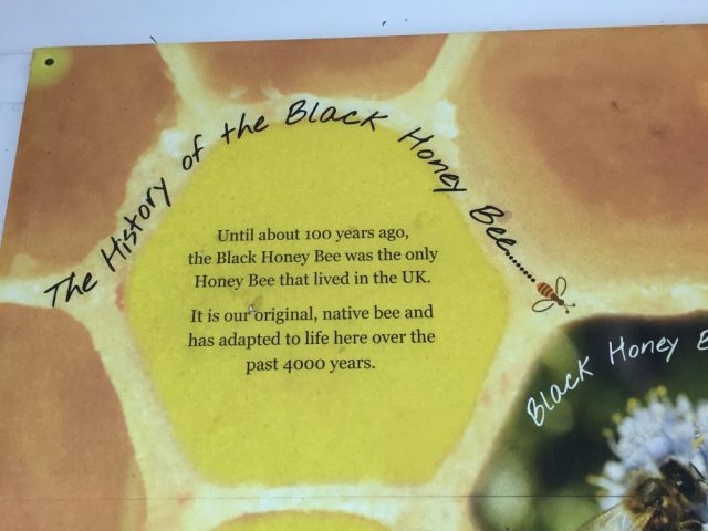 The history of the Black honey bee