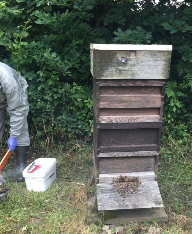 Bee Health Day 2018 apiary visit