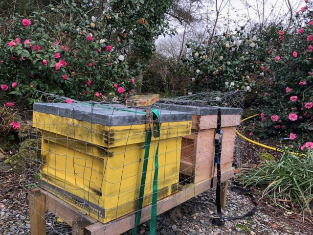 Hives surrounded by flowers