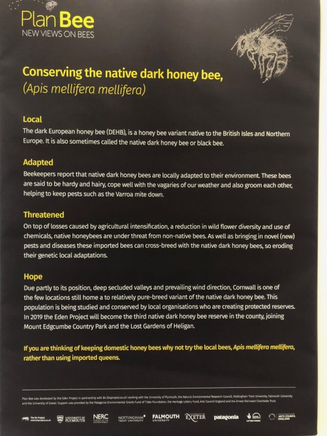 Conserving the native dark honey bee info