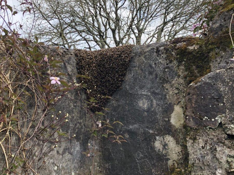 Swarm on wall