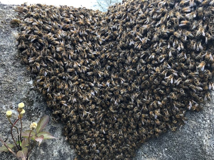 Swarm on wall closeup