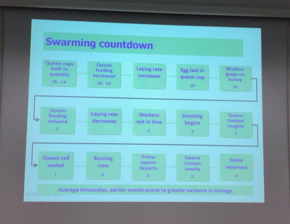 Swarming countdown chart