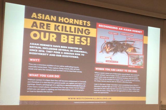 Asian hornet poster