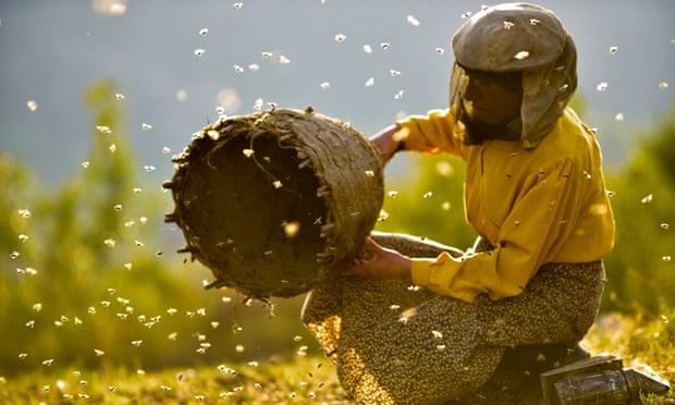 Honeyland film - Hatidze beekeeping